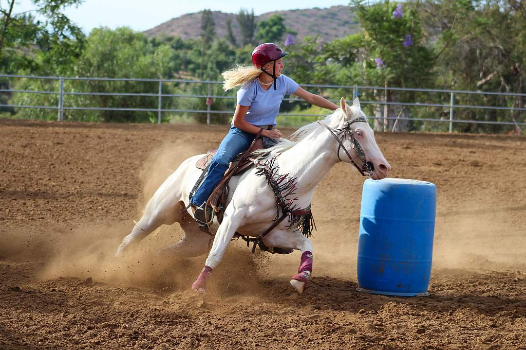 Horse Showing Joints Barrel Racing s