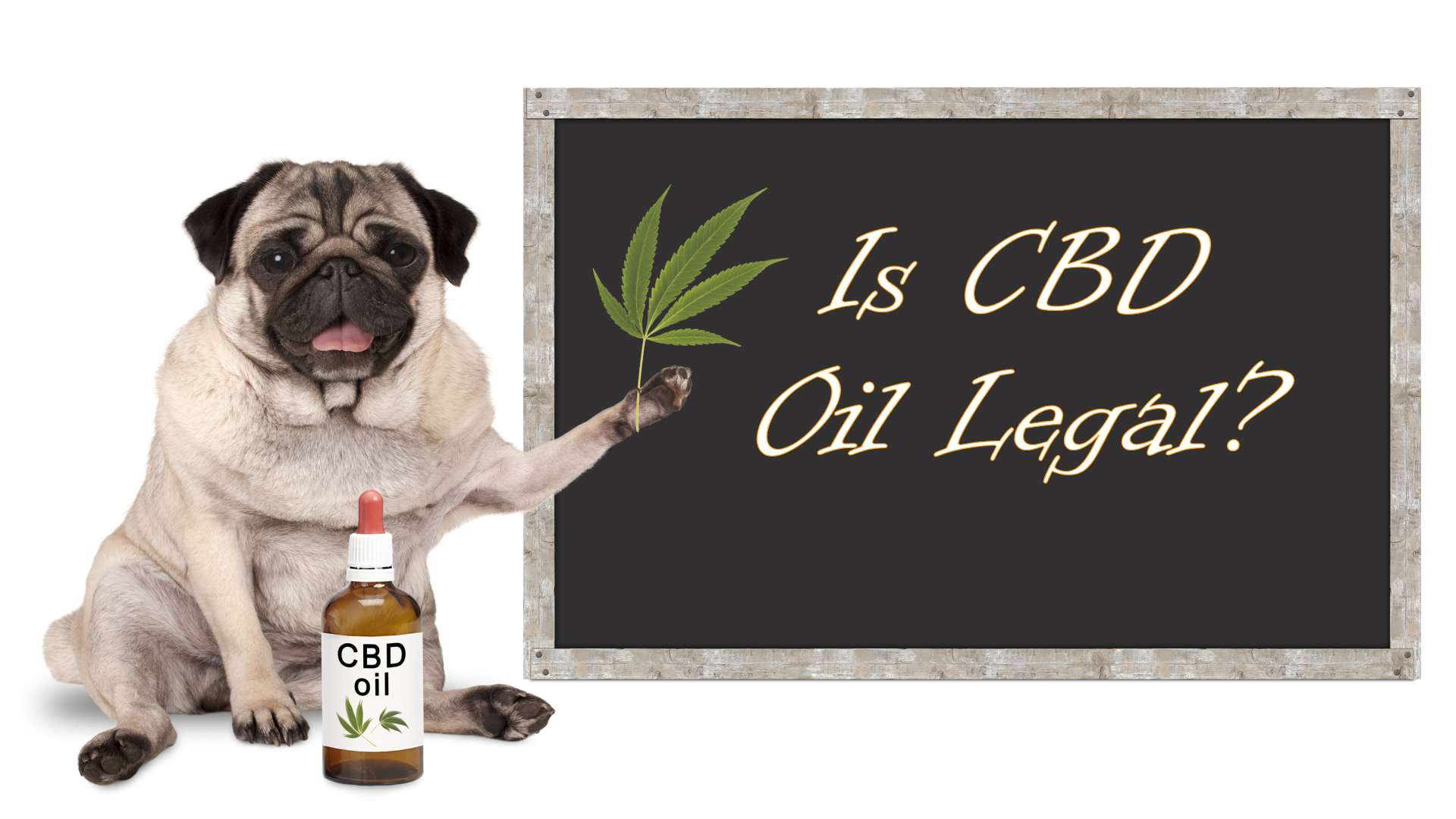 Is CBD Oil Legal - Healthy Steps LLC