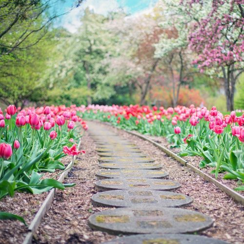 Spring Time Flowers Weight Loss